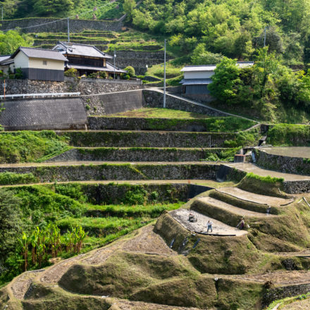 Terraced Rice Fields of Izumidani